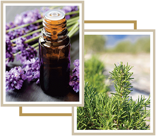 Lavender and Rosemary Products